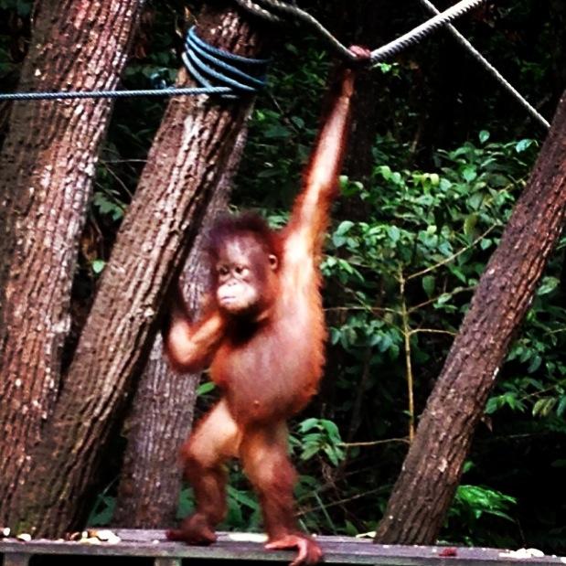 Monkeys of Borneo